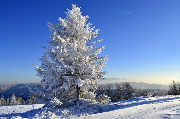 L'hiver photographié par Lakssya - agence web et e-marketing